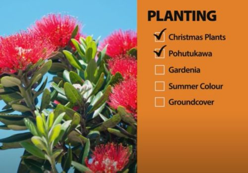December Garden Checklist | Mitre 10 Easy As Garden